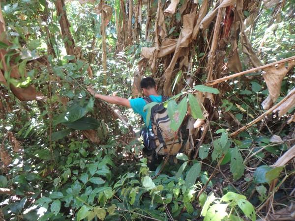 Jacky bahnt sich einen Weg durch den Dschungel