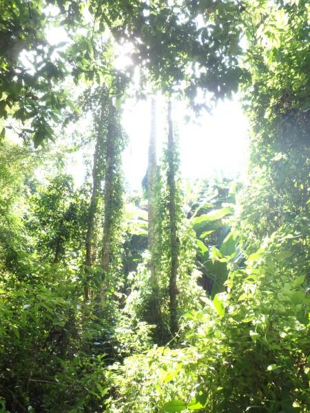 Wunderschönes Farbspiel im Dschungel - dort haben wir Mittagspause gemach.