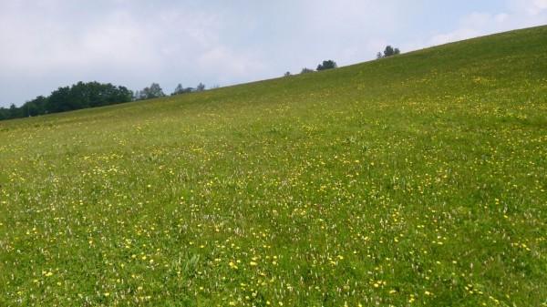Blumenwiesen so weit das Auge reicht